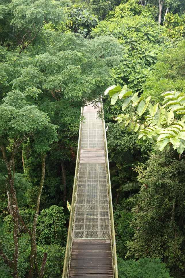 180114_Borneo02
