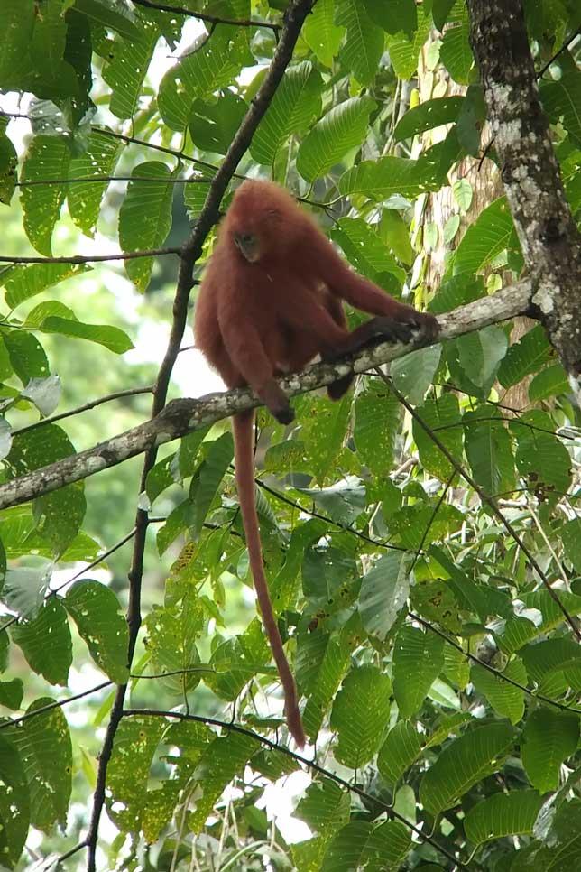 180114_Borneo04