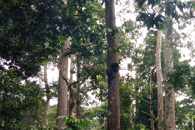 180114_Borneo05