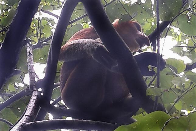 180114_Borneo14.jpg