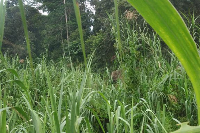 180114_Borneo15