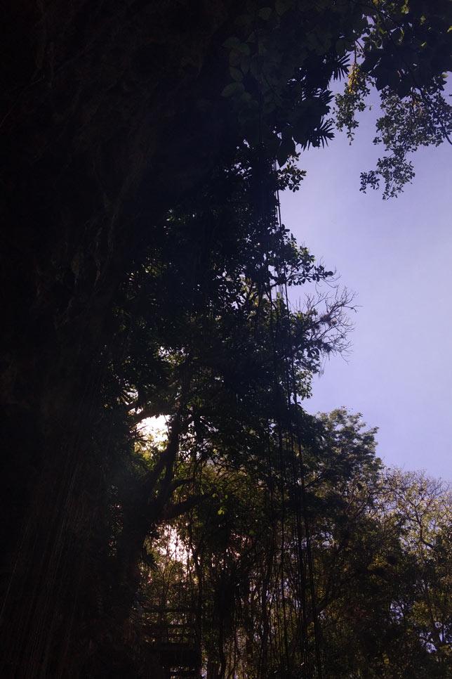 180420_Cenote02.jpg